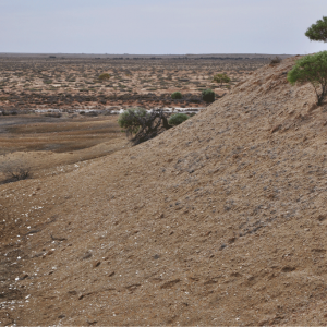 Australia's Nullarbor: good meteorite searching terrain
