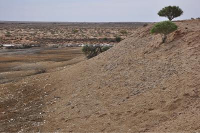 Australia's Nullarbor: good meteorite searching terrain