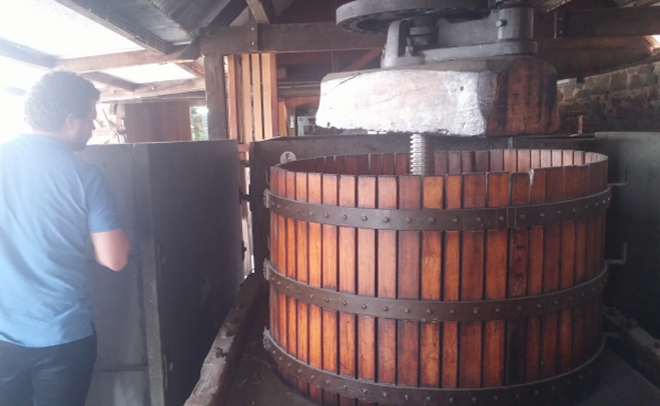 Exploring the process of wine making