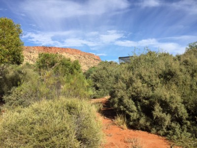 MacDonnell Ranges behind Alice Springs Desert Park